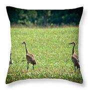 Sandhill Cranes And Friends Throw Pillow