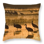 Sandhill Cranes Bosque Del Apache Nwr Throw Pillow