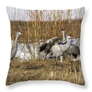 Sandhill Cranes Throw Pillow