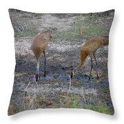 Sandhill Stork Throw Pillow