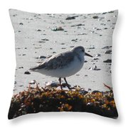 Sandpiper And Seaweed Throw Pillow