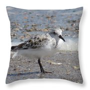 Sandpiper And Shells Throw Pillow