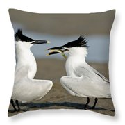 Sandwich Tern Offering Fish Throw Pillow