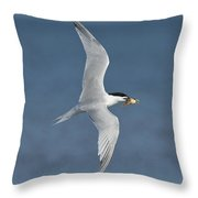 Sandwich Tern With Fish Throw Pillow