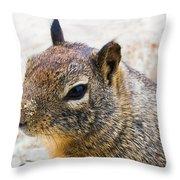 Sandy Nose Squirrel Throw Pillow