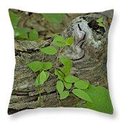 Sanford Vine Throw Pillow