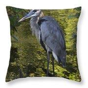 Sanibel Great Blue Heron Throw Pillow