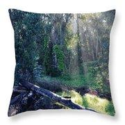 Santa Barbara Eucalyptus Forest II Throw Pillow