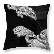 Santa Fe Feather Duster Throw Pillow