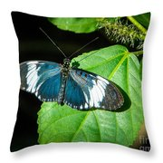 Sapho Longwing Butterfly Throw Pillow