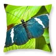 Sara Butterfly Throw Pillow