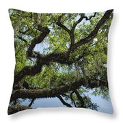 Savannah Live Oak And Spanish Moss Throw Pillow