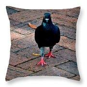 Savannah Pigeon Throw Pillow