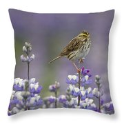 Savannah Sparrow And Nootka Lupine Throw Pillow