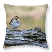 Savannah Sparrow Throw Pillow