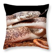 Savu Python In Defensive Posture Throw Pillow