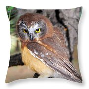 Saw-whet Owl In Conifers Throw Pillow