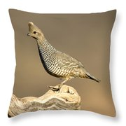 Scaled Quail Callipepla Squamata Throw Pillow
