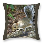 Scampering Squirrel Throw Pillow