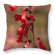 Scarlet Colorado Penstemons Throw Pillow