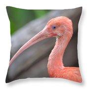Scarlet Ibis 1 Throw Pillow