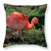 Scarlet Ibis Hybrid Throw Pillow