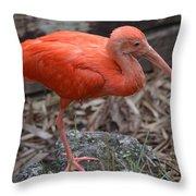 Scarlet Ibis One Legged Pose Throw Pillow