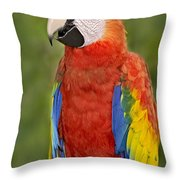 Scarlet Macaw Parrot Throw Pillow