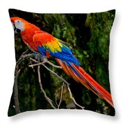 Scarlet Macaw Perched Throw Pillow