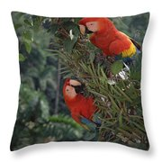 Scarlet Macaws In Rainforest Canopy Throw Pillow