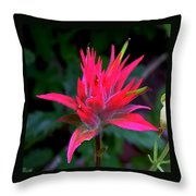Scarlet Paintbrush On Swiftcurrent Pass Trail In Glacier National Park-montana Throw Pillow