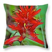 Scarlet Paintbrush On Trail To Swan Lake In Grand Teton National Park-wyoming- Throw Pillow