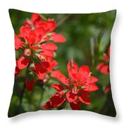 Scarlet Paintbrush. Texas Wildflowers. Castilleja_indivisa Throw Pillow