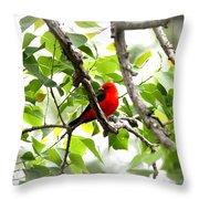 Scarlet Tanager - 11 Throw Pillow