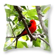 Scarlet Tanager - 19 Throw Pillow