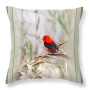 Scarlet Tanager 3630-10-ttp Throw Pillow