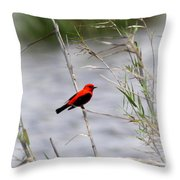 Scarlet Tanager - Coastal - Migration Throw Pillow