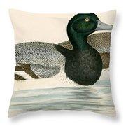 Scaup Duck Throw Pillow