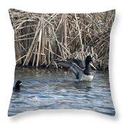 Scaup Show Off Throw Pillow