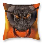 Sceliphron Spirifex 41 Throw Pillow