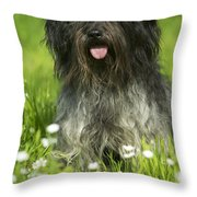 Schapendoes, Or Dutch Sheepdog Throw Pillow