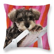 Schnauzer Puppy Looking Over Top Throw Pillow