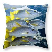 Schoolmaster Snappers Throw Pillow