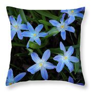 Scilla Flowers In The Morning Throw Pillow