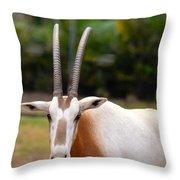 Scimitar Horned Oryx 2 Throw Pillow