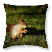 Sciurus Vulgaris In Evening Light Throw Pillow