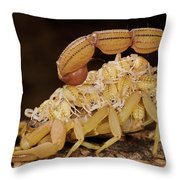 Scorpion Mother Carrying Her Brood Throw Pillow
