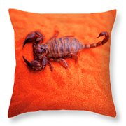 Scorpion Red Sand Sting Insect Throw Pillow