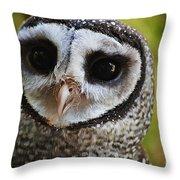 Scott Throw Pillow