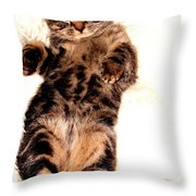 Scottish Fold On Back 1a Throw Pillow